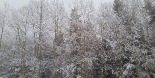 Moab & La Sal Mountains Winter Recreation Report