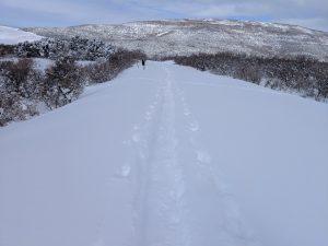 cross country ski tracks in snow