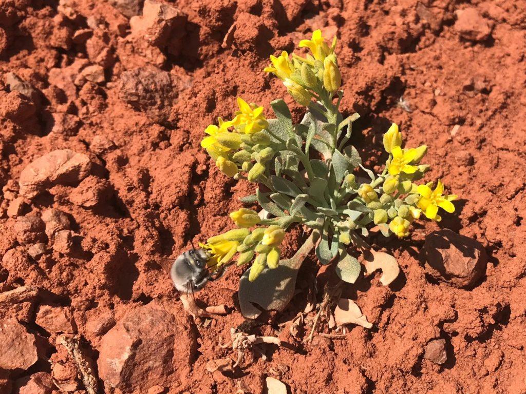 wildflower moab utah twinpod